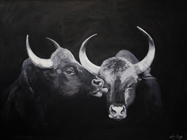 kissing bulls